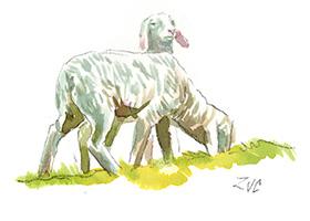 zuc-murceti-murce-pecore-agnelli-caseificio